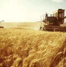 В Самарской области достигнут прошлогодний рекордный уровень сбора зерновых