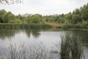 В Самарской области Воронежские озера очищают от грязи