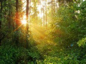 В Самарской области отпразднуют День работников леса