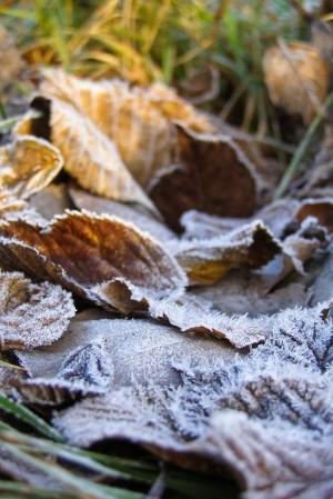 В Самарской области ожидаются ночные заморозки  до -3 °C