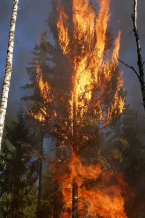 ЦУКС Самара: В Самарской области сохраняется высокая пожарная опасность лесов