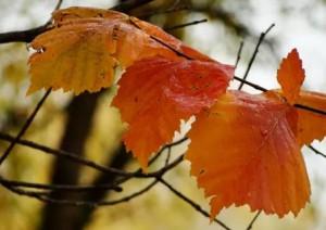Самарскую область ожидает теплый октябрь