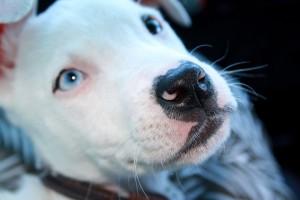 В Сызрани собака получила ранение, спасая хозяина от напавшего с ножом пьяного хулигана
