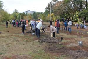 В парке «Воронежские озера» высадили пятьдесят молодых лип