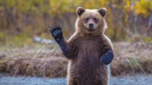 Медведь напал на школьника в центре города в Иркутской области
