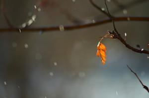 В Самарской области в большинстве районов дождь с порывами ветра до 17-22 м/с