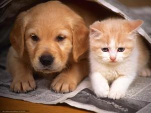 Россиян обяжут платно регистрировать кошек и собак