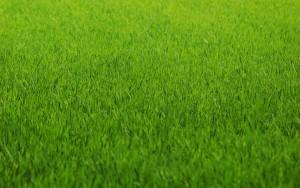Укладывать газон на стадионе для ЧМ-2018 в Самаре начнут только через месяц