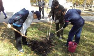 Самара принимает участие во Всероссийской акции «Дерево Победы»