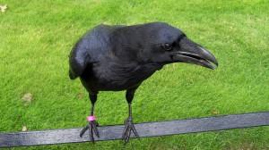 Двое голландских инженеров решили научить птиц убирать парки за еду