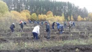 Во Всероссийском экологическом субботнике приняли участие тринадцать тысяч работников КбшЖД