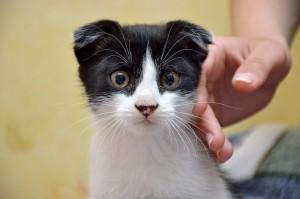 Японцы изобрели подушку Qoobo, которая заменит кота