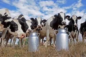 В Самарской области Роспотребнадзор потребовал закрыть две молочные фермы