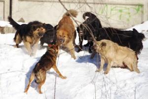 В Самаре намерены отловить почти 7 тысяч бездомных собак и кошек