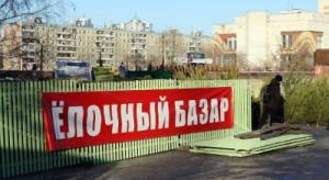 В Самаре начался прием заявок на организацию торговли хвойными деревьями