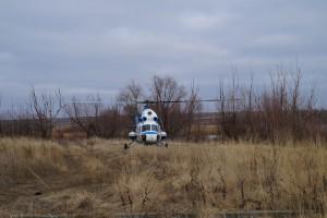 Специалисты на вертолете облетели Красноармейский район с целью выявления погибших кабанов, как источников АЧС