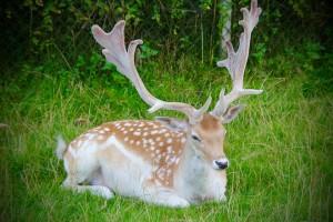 Porokello — первое в мире приложение для оленей