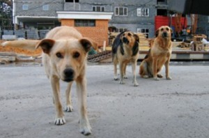 В Сызрани вдвое подорожал отлов бездомных собак и кошек