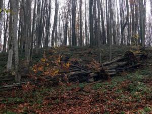 Завершена расчистка леса вокруг стадиона «Самара-Арена»