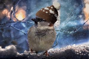 ЦУКС: В Самаре ожидается мокрый снег, местами туман, гололед