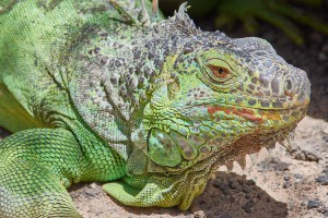 Каких экзотических животных покупают и продают в Самаре