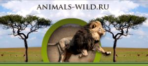 Жители Самары могут принять участие в интернет — проекте «Животный мир»