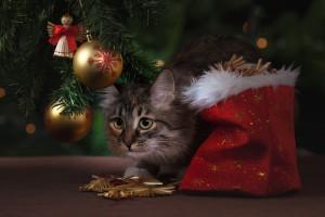 Росстат рассказал о динамике цен на новогодние подарки