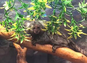 Самарский зоопарк отметит Международный день обезьян