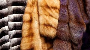 Роспотребнадзор арестовал более 10 тыс. меховых изделий