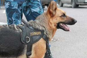 В Самаре служебная собака помогла полицейским по горячим следам раскрыть кражу ноутбука