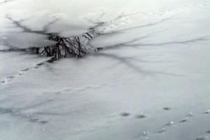 В Тольятти рыбак провалился под лед