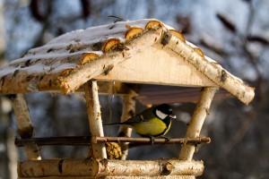 В Саратове раздадут 1 тыс. кормушек для зимующих птиц