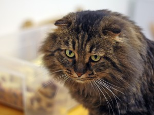 Жители Самары больше любят кошек, чем собак